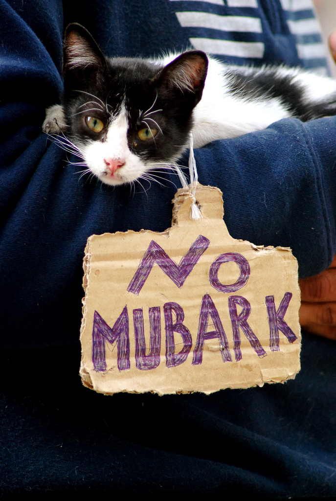 Katze gegen Mubarak (Foto: Rowan El Shimi (flickr))