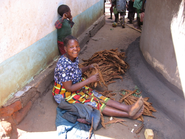 Sortieren von Burley-Tabak in Malawi